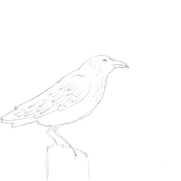 crow-sketch-1024